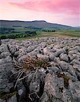 Kalk-Felspflaster in der Nähe von Chapel-le-Dale, Yorkshire Dales National Park, Yorkshire, England, Vereinigtes Königreich, Europa