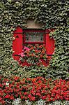 Efeu bedeckt Hütte, Stadt von Borris, County Carlow, Leinster, Irland, Europa