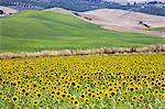 Countryside near Ronda La Vieja, Ronda, Malaga province, Andalucia, Spain, Europe