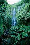 Pied une centaine Wailua falls près d'ouangbanga, une des vues sur la célèbre côte de Hana, Maui, Hawaii, États-Unis d'Amérique, l'Amérique du Nord