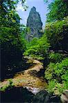 Les affleurements calcaires spectaculaires et vallées boisées du parc forestier de Zhangjiajie dans la région pittoresque de Wulingyuan, Province de Hunan, Chine