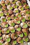 Escargots, marches Président-Wilson, Paris, Ile de France, France