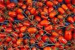 Tomates, marches Président-Wilson, Paris, Ile de France, France