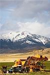 Kombinieren Sie ernten in einem Feld, Virginia City, Madison County, Montana, USA
