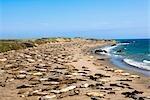 Sea lions resting at the coast,California,USA