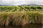 Blenheim, South Island, New Zealand