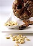 Pignolias (with pine cone) - Pinus parviflora