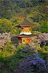 Pagoda and Cherry Blossoms at Sunset, Miyajima Island, Japan