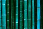 Gros plan d'une forêt de bambous au crépuscule, près de Kyoto, Japon