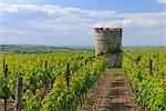 Vignoble et tour du vieux château, Ober-Florsheim, Alzey-Worms, Rhénanie-Palatinat, Allemagne