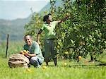 Travailleurs cueillette des Oranges
