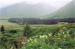 SCOTLAND MISTY LANDSCAPE WITH FLOWERS