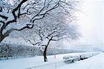 NEW YORK, NY SCHNEE BEDECKTE BÄUME UND STRÄUCHER IM WINTER