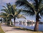 1960s PALM TREE LINED STREET SKYLINE VIEW OF CONDADO BEACH HIGH RISE HOTELS SAN JUAN PUERTO RICO