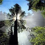 N. CALIFORNIA REDWOOD FOREST