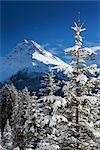 Bäume im Winter, Arosa, Schweiz
