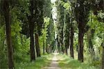 Route de campagne bordée d'arbres