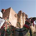 Homme monté sur un chameau devant un fort, Fort de Meherangarh, Jodhpur, Rajasthan, Inde