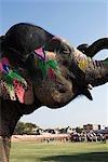 Peint éléphant debout sur le terrain, le Festival de l'éléphant, Jaipur, Rajasthan, Inde