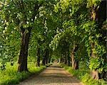 Pavées Lane, l'île de Rügen, Mecklenburg-Ouest Pomerania, Allemagne