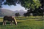 Pferde grasen auf eine Landschaft, Killarney, County Kerry, Irland
