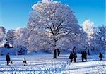 Winter Scene in Ormeau Park, Belfast, Ireland