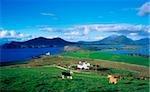 Valentia Island Ring of Kerry, Co Kerry, Ireland