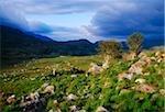 Molls Gap, Killarney Nationalpark, County Kerry, Irland; Felsige szenische
