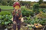 Scarecrow in Organic Garden