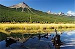 Waterfowl Lake, Jasper National Park, Alberta, Canada