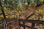 Giant Cedars Trail, Mount Revelstoke National Park, British Columbia, Canada