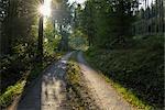 Country Road, Hafenlohr, Main-Spessart, Bavaria, Germany