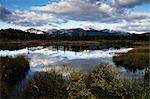 Marécage, Parc National Jasper, Alberta, Canada
