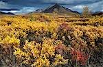 Tombstone-Bereich und im Herbst Tundra, Tombstone Territorial Park, Yukon Territory, Kanada