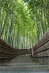 Allée en bambou forêt, Sagano, Kyoto, Japon