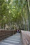 Alley en bamboo forest, Sagano, Kyoto, Japon