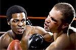 Boxer kämpfen