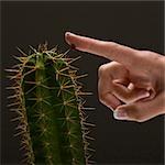 Main de la jeune femme touchant des enrichissements de cactus
