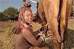 Close up of a Himba women milking cow, Epupa Falls area, Kaokoland, Namibia