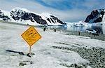Gentoo penguins (pygoscelis papua) & tourists fun sign.