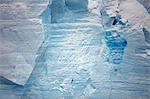 L'Antarctique, la péninsule Antarctique. Avec en fond le majestueux d'un immense iceberg tabulaire, une utilisation de Pétrel géant (Macronectes giganteus) tourbillons de vent formé par son micro climat à patrouiller à son bord en quête de nourriture.