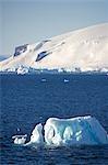 """Antartica, péninsule de l'Antarctique, l'Antarctic Sound. Un fortement altéré """"""""growler' ou un petit iceberg tanné par le soleil de l'été court et constante renversant et comme son centre de changements de gravité."""