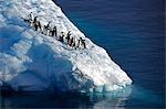 Antartica, péninsule de l'Antarctique ; L'Antarctic Sound, autrement connu comme couloir d'icebergs. Un groupe de Manchots Adélie, explorateur français Dumont d'Urville en leur nom pour sa femme Adélie, reposer sur un iceberg « bergy bits » ou petit fortement altéré.