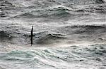 L'Antarctique, Passage de Drake. Un Pétrel géant (Macronectes giganteus) déferle gracieusement sur les eaux de vent orageuses de la traversée du Passage de Drake de l'Antarctique continental de l'Amérique du Sud