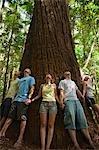 Visiteurs sonner un immense arbre de Satinay. La Satinays de l'île Fraser étaient une fois très prisés du bois et servaient de pylônes dans la construction du canal de Suez.