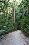Une route sablonneuse serpente à travers la dense forêt tropicale humide de l'intérieur de l'île de Fraser. Les pistes, une fois utilisés par les bûcherons pour transporter du bois, traversent l'île et ne sont accessibles que par quatre roues de voiture.