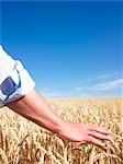 Mans Hand im Weizenfeld