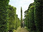 Jardinier inspecter les arbres à feuilles persistantes