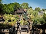 Travailleur féminin Garden Center avec des plantes