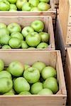 Crates of Organic Apples, Penticton, Okanagan Valley, British Columbia, Canada